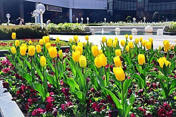 Сочи весной