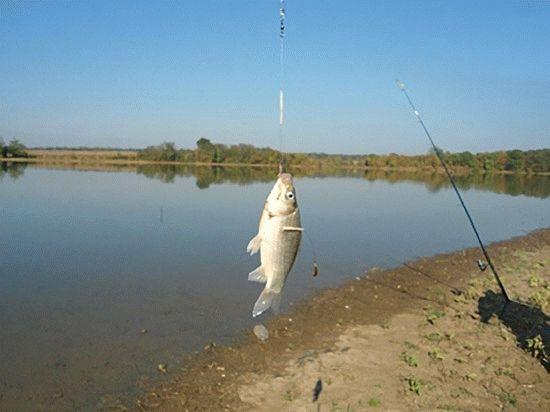 Рыбалка в станице
