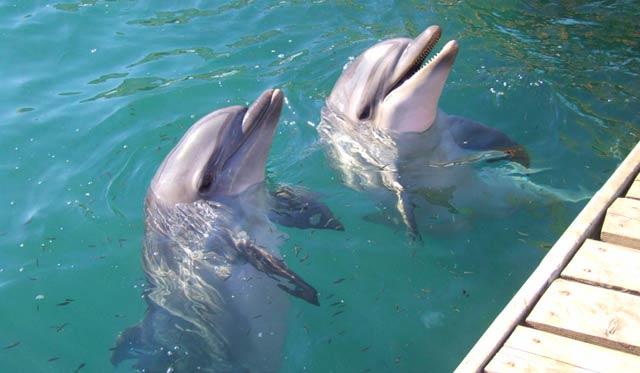 Дельфины на Утрише