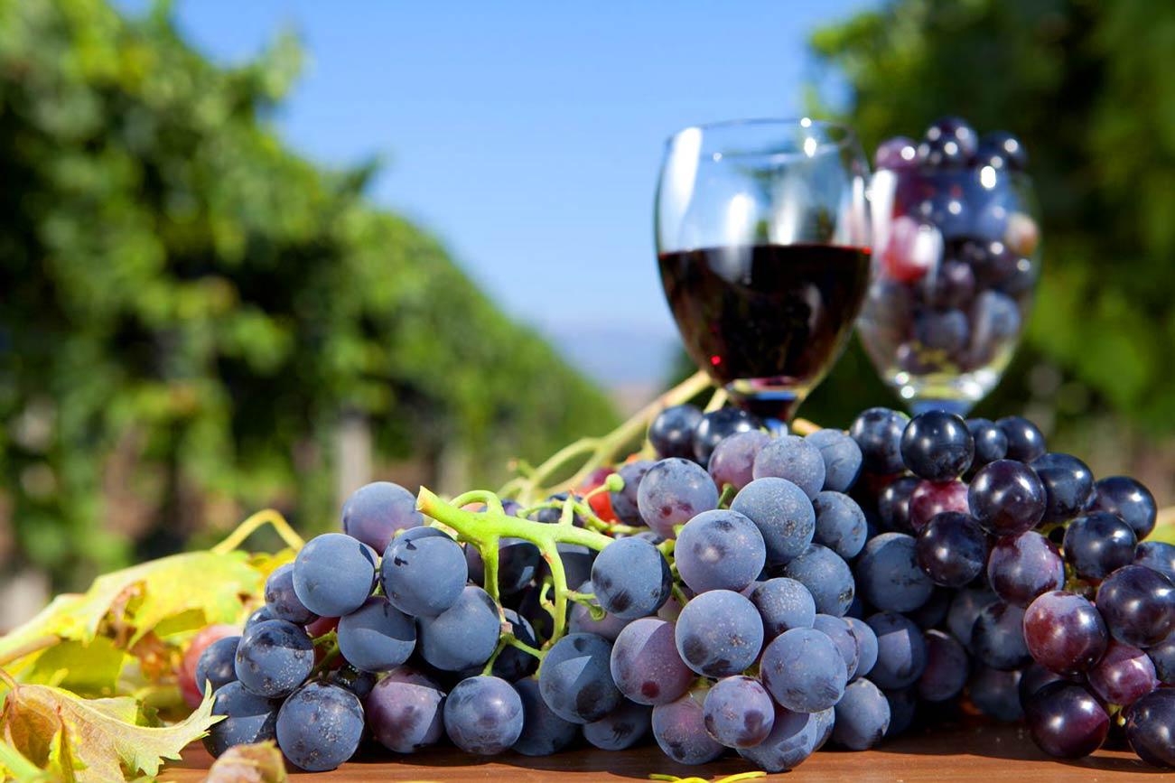 Виноград в Анапе