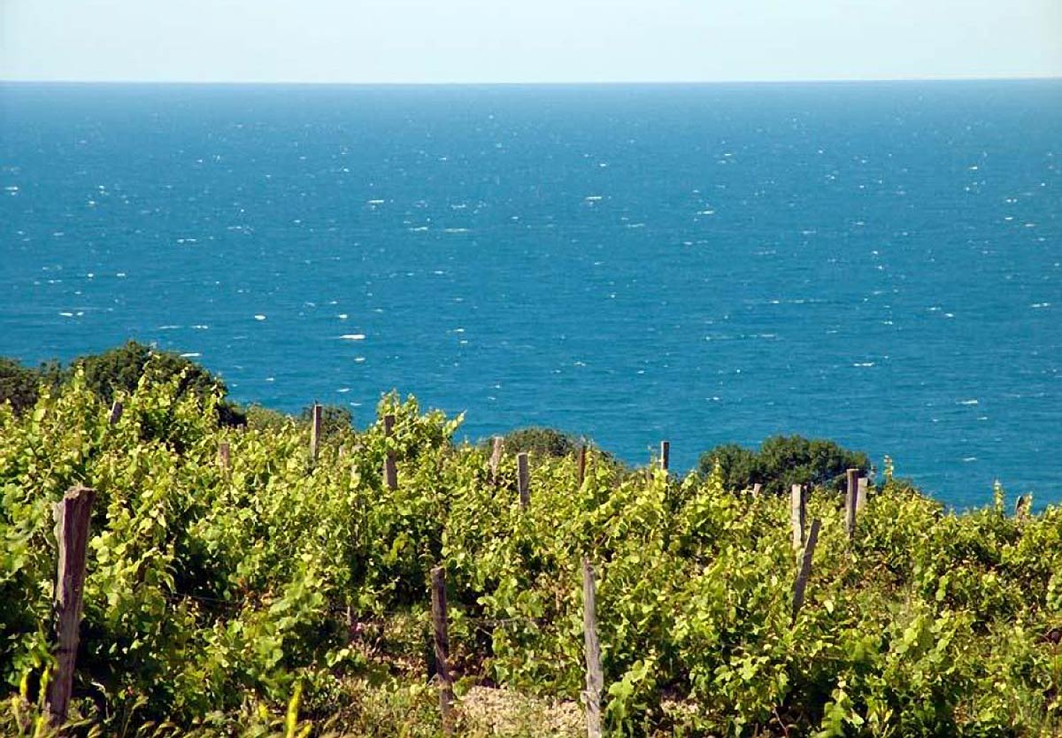Виноградники в Анапе