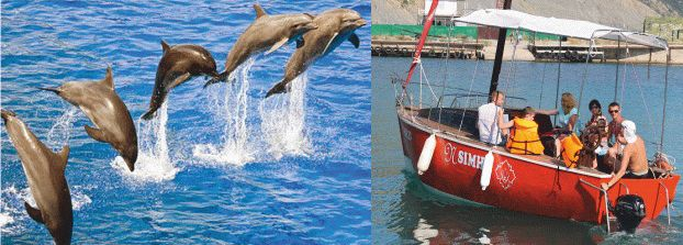 В море к дельфинам