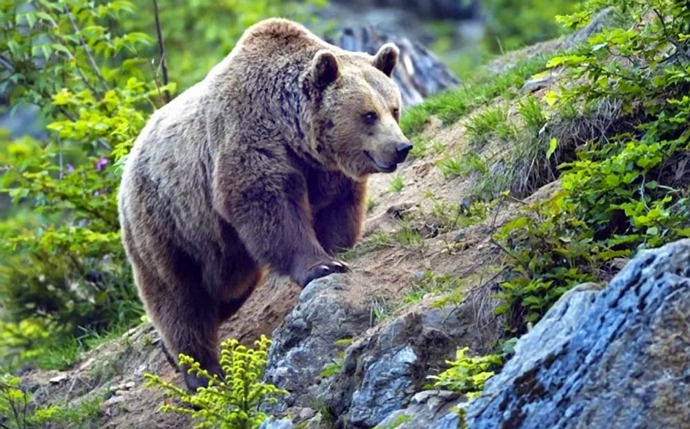 редкие животные краснодарского края фото собирается показывать