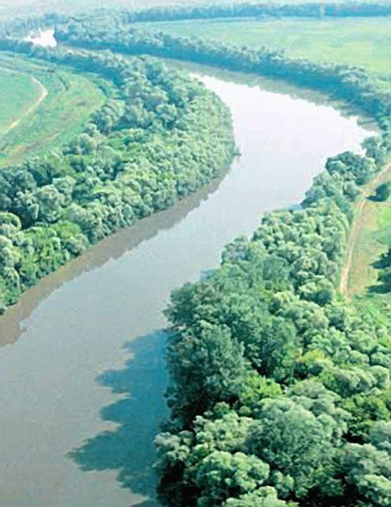 Животный и растительный мир реки Кубань