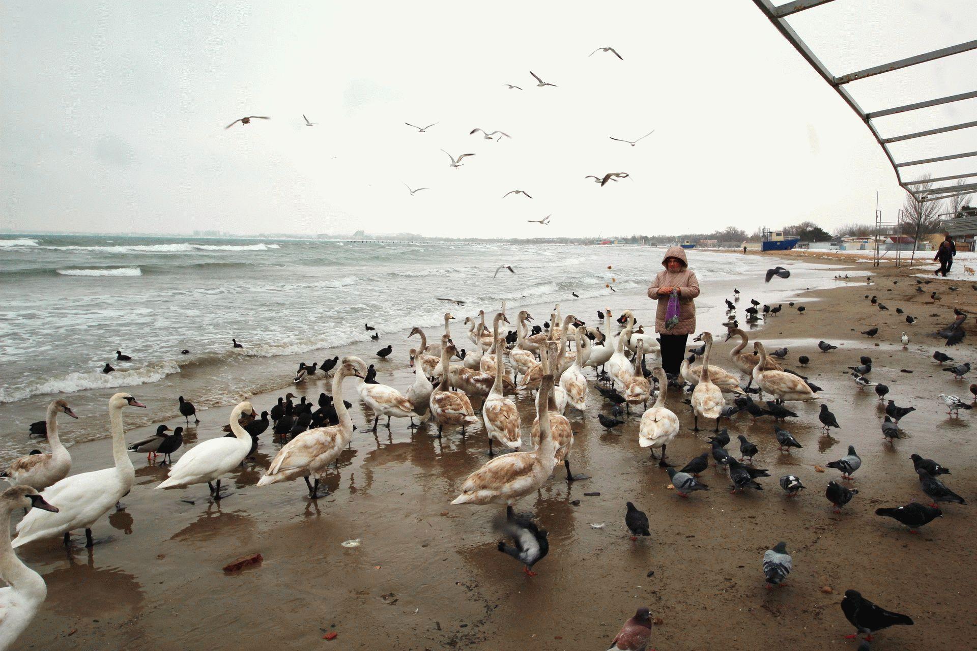 У берегов Анапы зимуют птицы