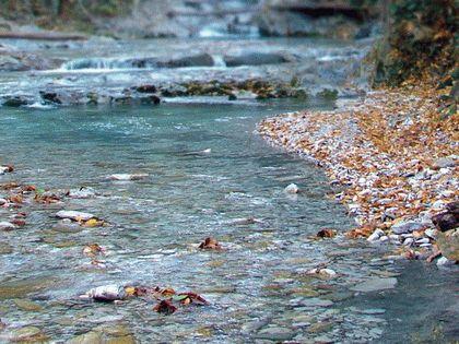 Река Чилипси