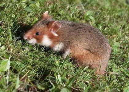 Животные степей Кубани